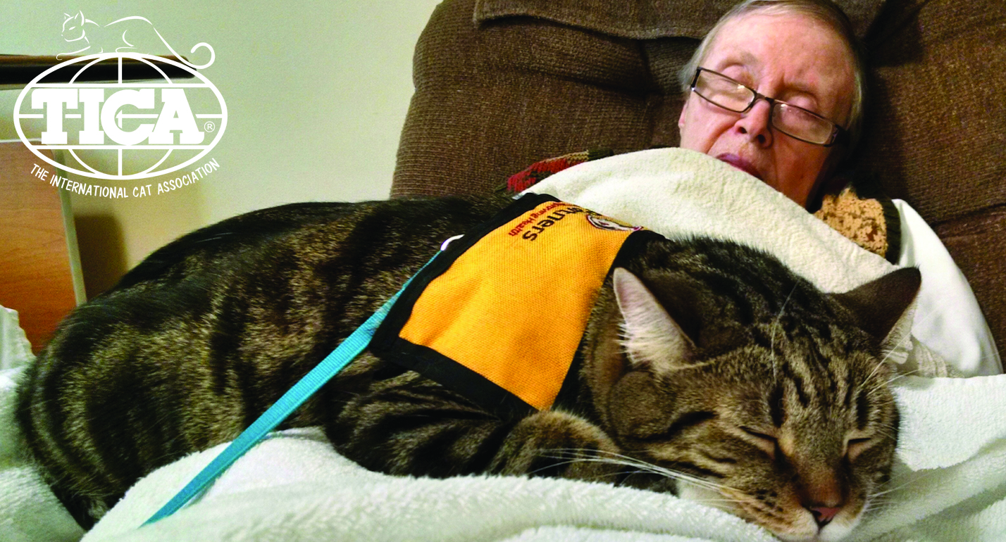 TherapyCat Top