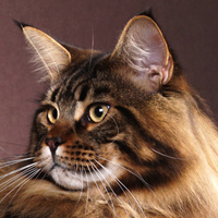 24th Best Longhair Cat Of The Year