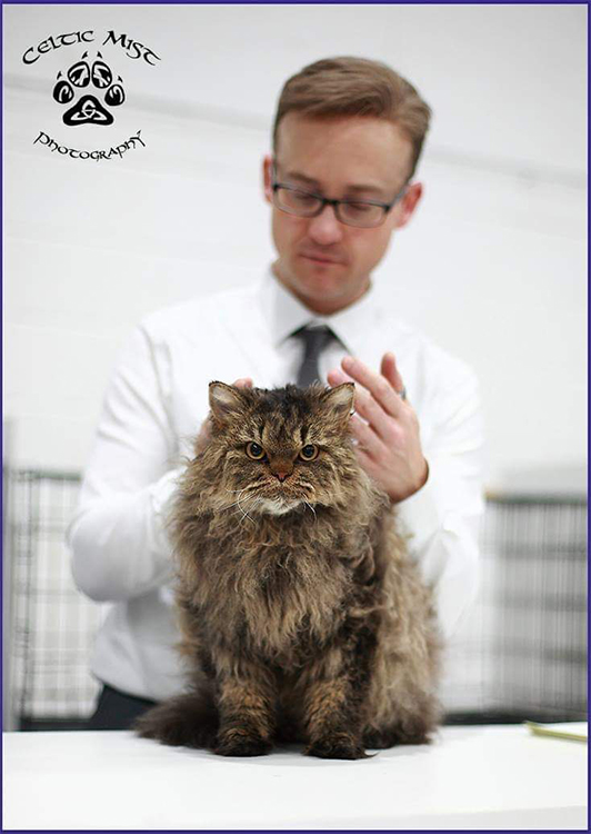 21st Best Longhair Cat Of The Year: BOUCLES MONSIEUR INCROYABLE
