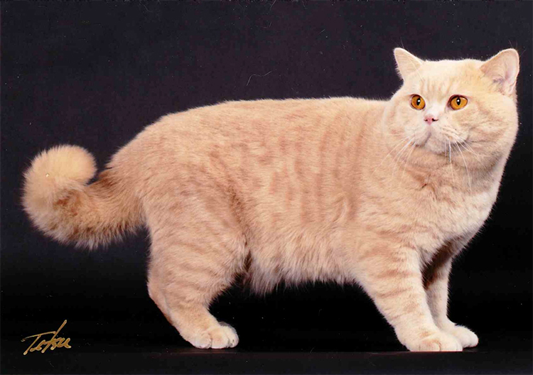 17th Best Shorthair Cat Of The Year: DOUDOU HUG FRANCIS