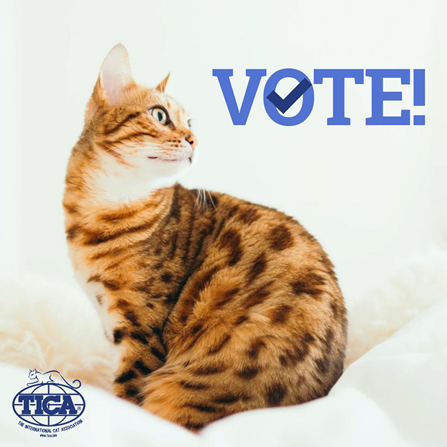 tica election cat